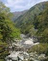 20060515mon_kazura3