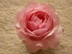 20061225mon_rose_toredi