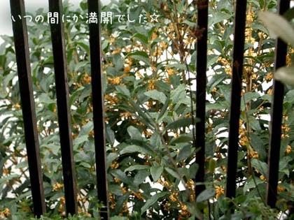 20071008mon_kinmokusei