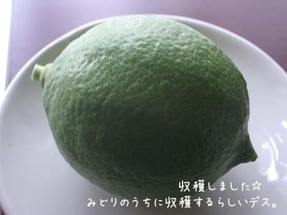20071023tue_lemon