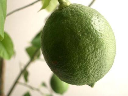 20071023tue_lemon2
