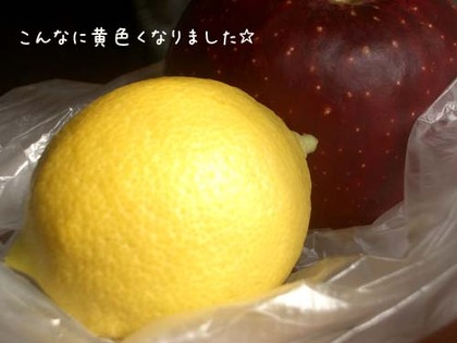 20071030tue_lemon