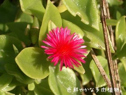 20071113_sajima5