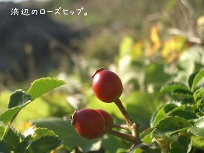 20071113_sajima6