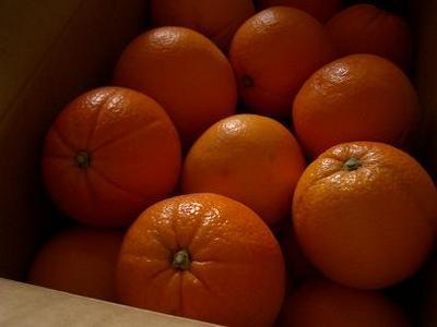 20070203sat_orange