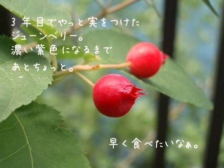 20070530wed_juneberry