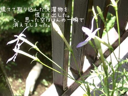 20070601fri_harema