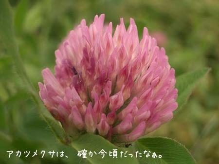 20070603sun_tagmagawaakatsumekusa