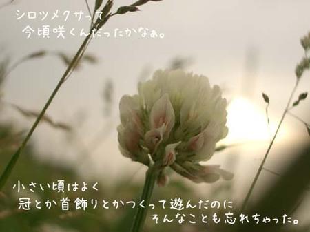 20070603sun_tagmagawashirotsumekusa