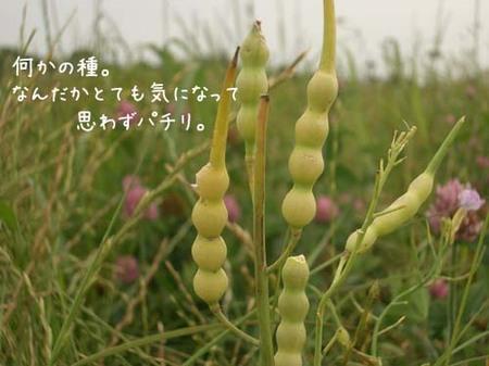 20070603sun_tagmagawatane