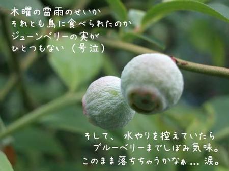 20070604mon_blueberry