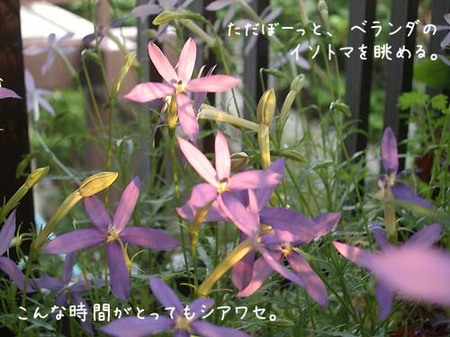 20070605tue_isotoma