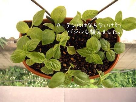 20070610sun_basil