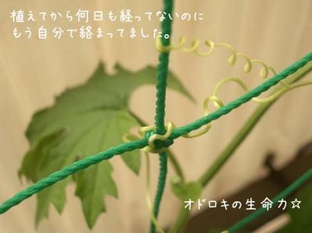 20070610sun_goya1