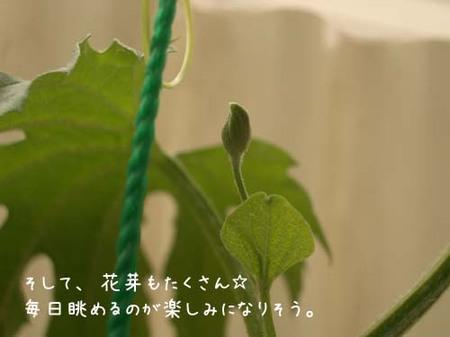 20070610sun_goya2