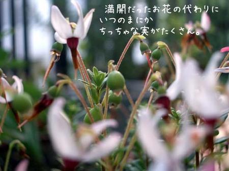 20070612tue_kokemomo