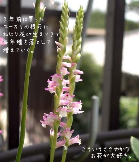 20070628thu_nejiribana