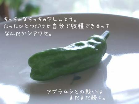 20070628thu_shishitou