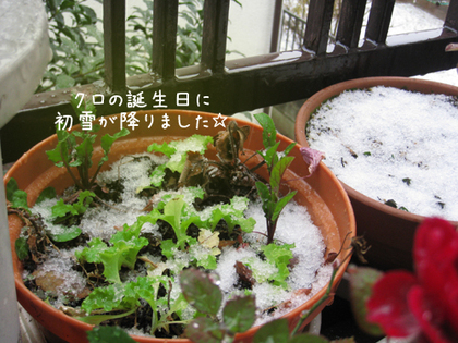 2000123wed_hatsuyuki