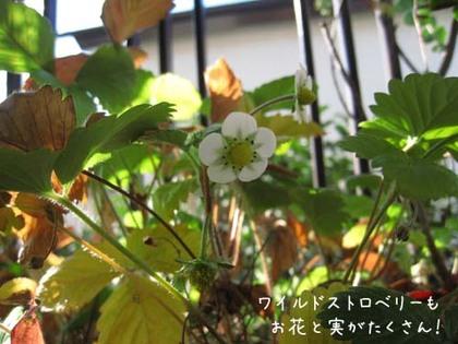 2000124thu_berry