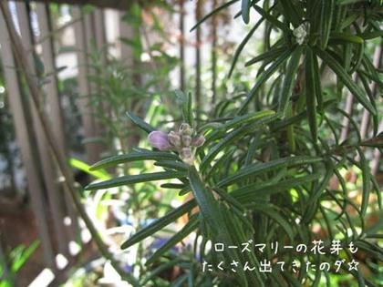 2000124thu_roemarry