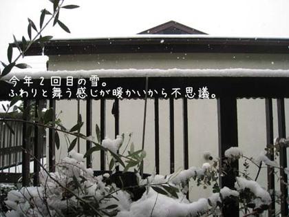 2000203sun_yuki1