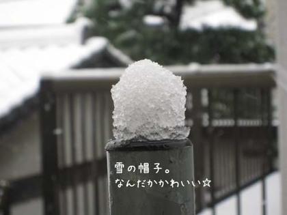 2000203sun_yuki2