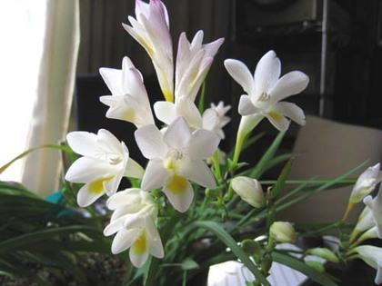 2000328fri_flower