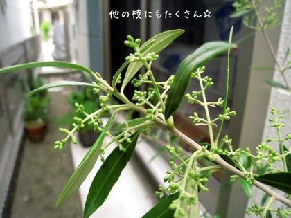 20080509fri_olive