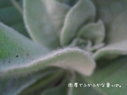 20080515hu_sea10