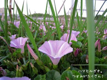 20080515hu_sea11