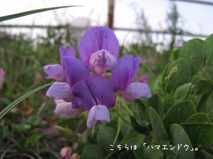 20080515hu_sea12