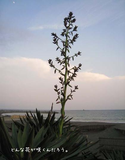 20080515hu_sea14