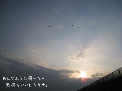 20080515hu_sea2