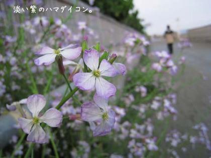 20080515hu_sea6