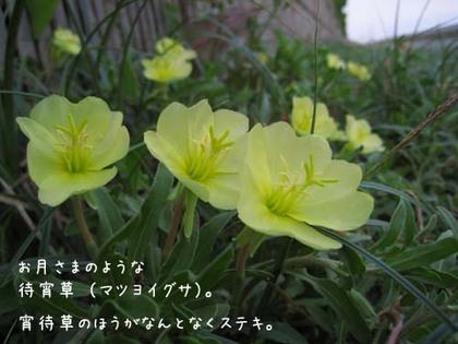 20080515hu_sea8