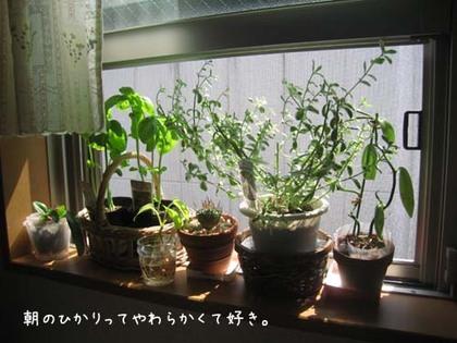 20080530fri_madobe