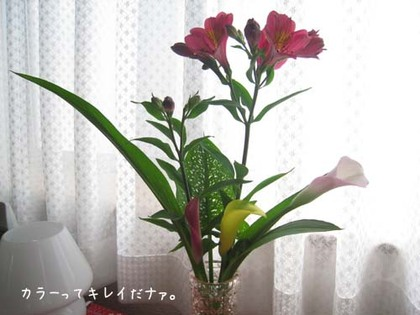 20080619thu_hana