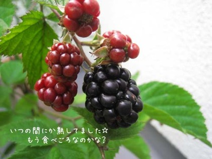 20080708tue_berry