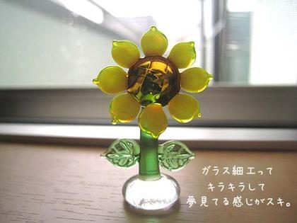 20080711fri_himawari