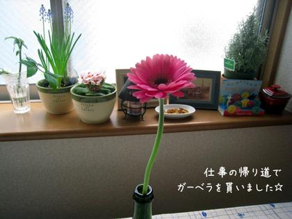 20090211wed_flower2