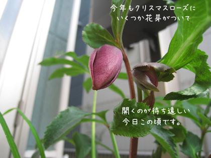20090211wed_flower3