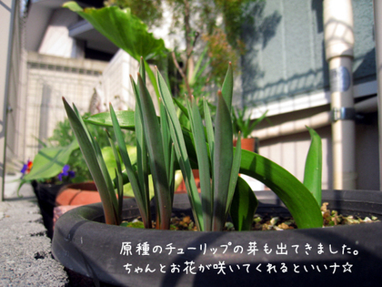 20090211wed_flower4