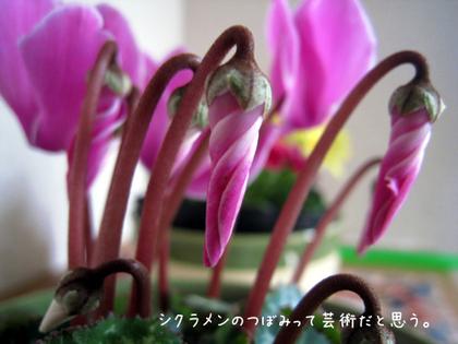 20090211wed_flower6