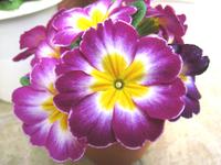 20090211wed_flower7