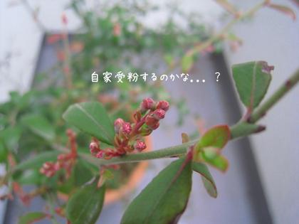 20090316mon_berry