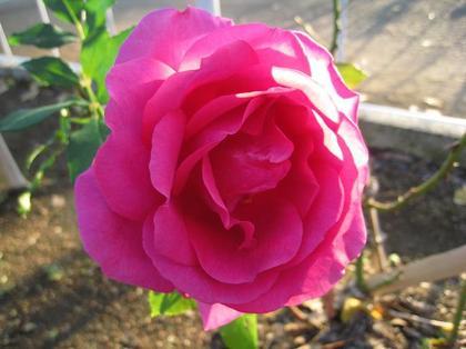 20101204sat_park22.jpg